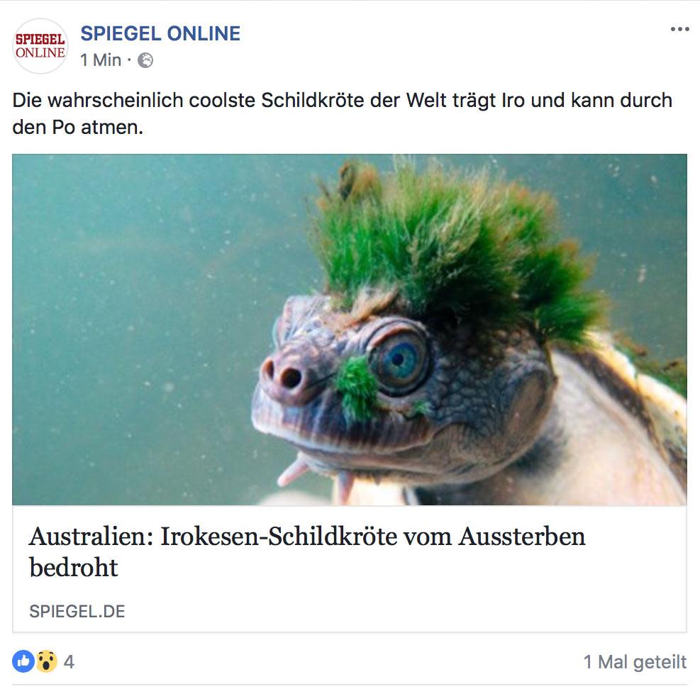 iro turtle